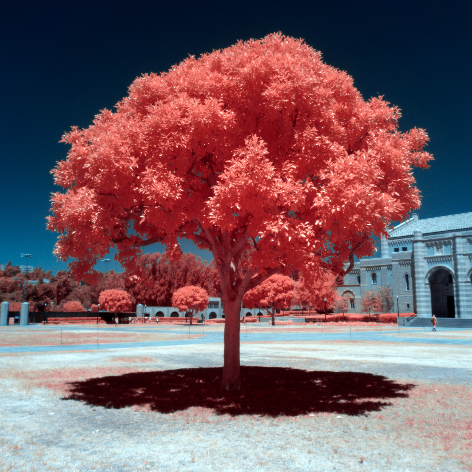 Digital Infrared Photography by Chris Peters